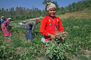 Women are Farmer